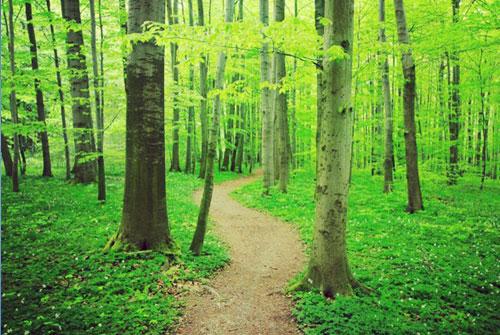 Luto: O Caminho árduo (mas Necessário) A Percorrer…