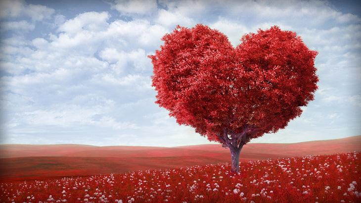 A Necessidade De Amor E Aprovação!