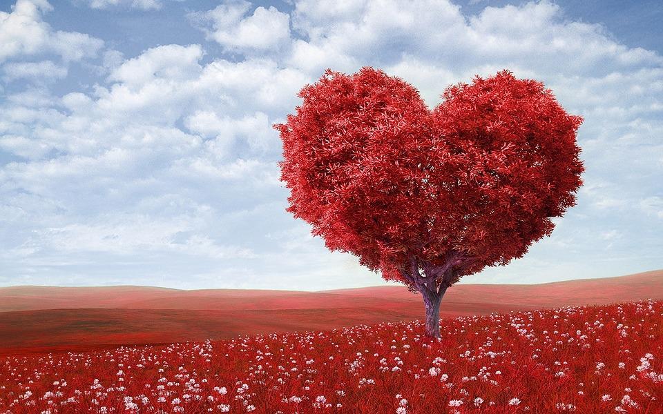 Necessidade De Amor E Aprovação?